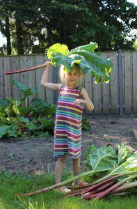 Samira zorgt voor de rabarber oogst