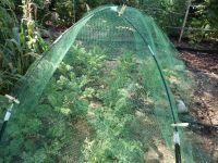Boerenkool onder een tentje